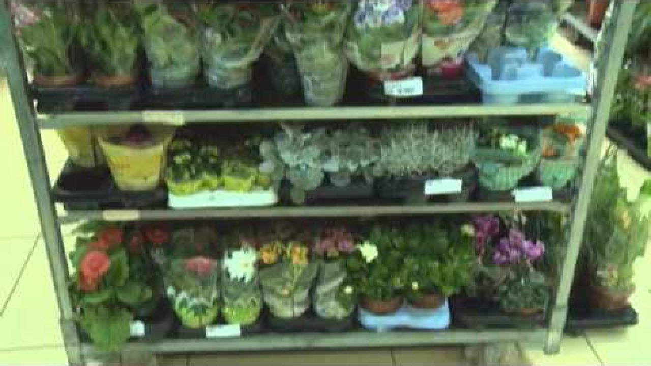 Цветочный бизнес.